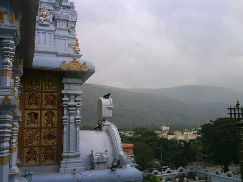 The divine Tirumala hills in the background.